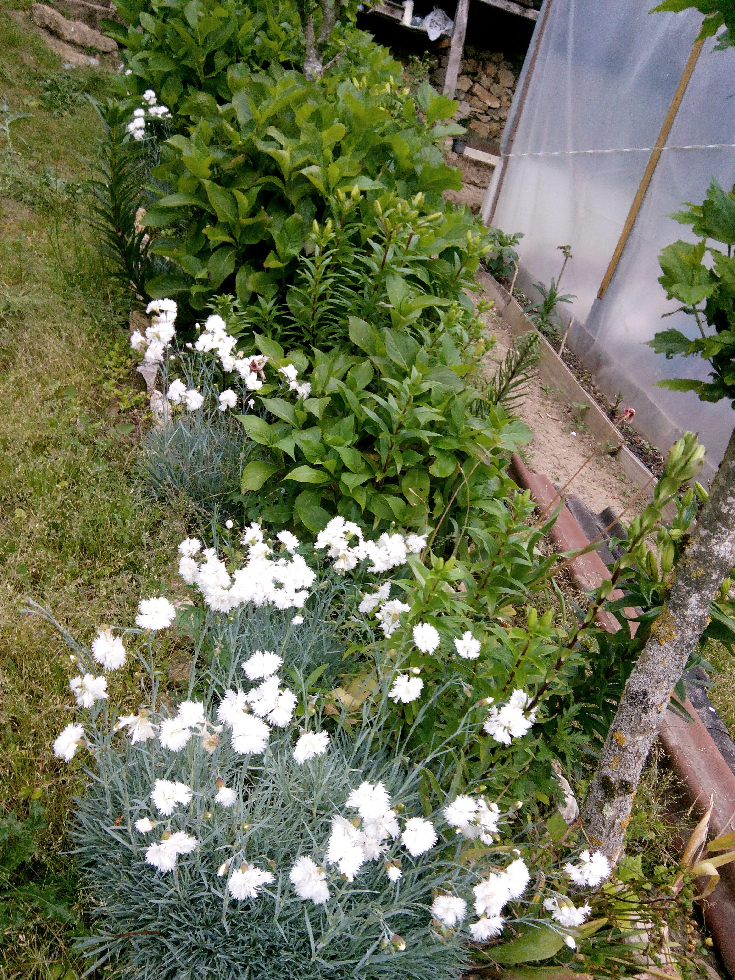 Claveles y hortensias