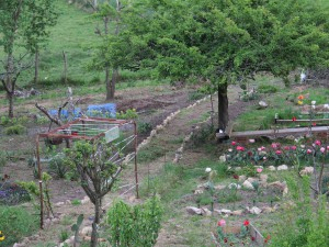 El jardin va tomando forma