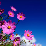 HD-Flowers-Wallpapers-11.jpg