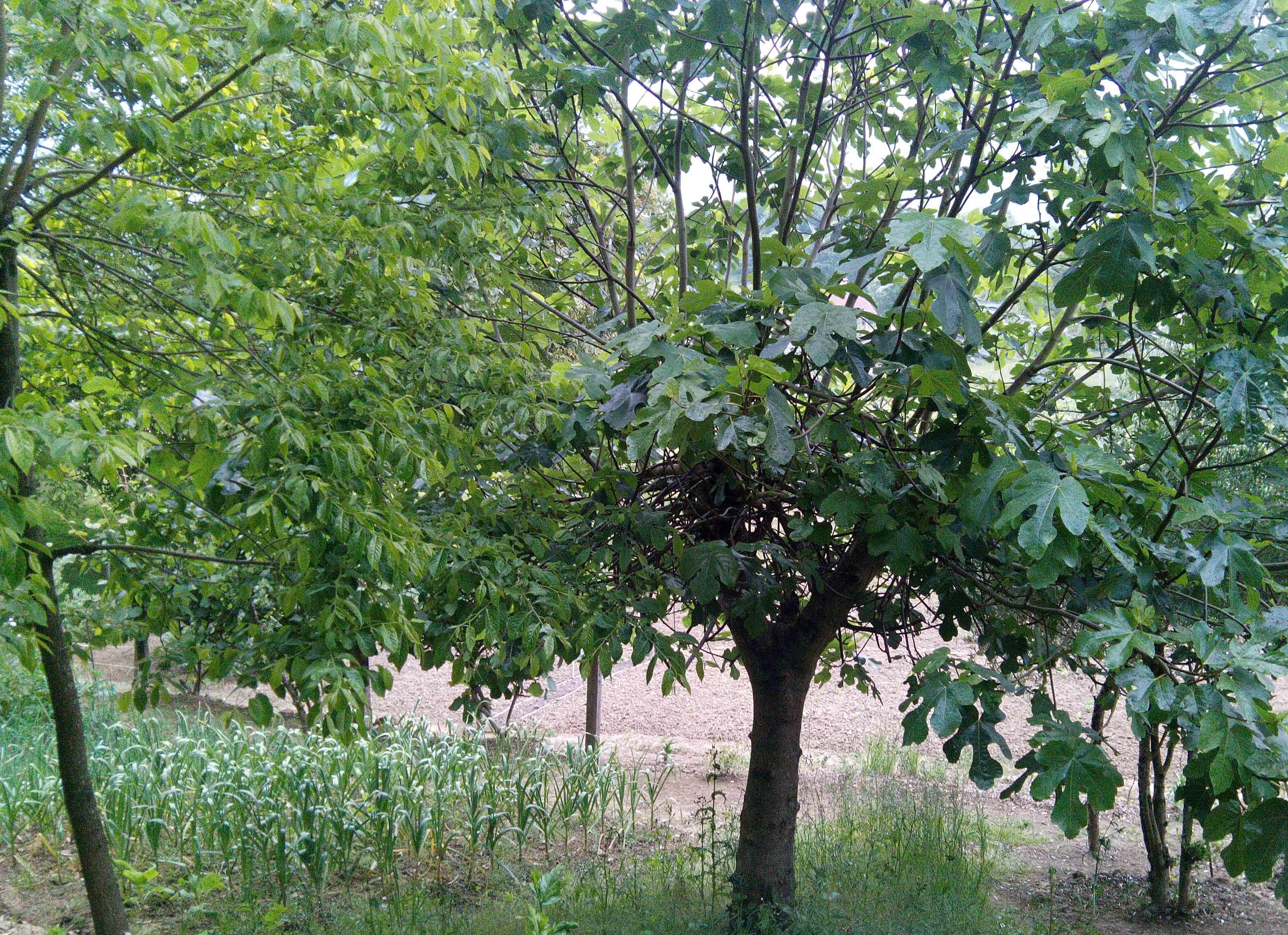 Arboles y arbustos jard n de - Arboles y arbustos ...
