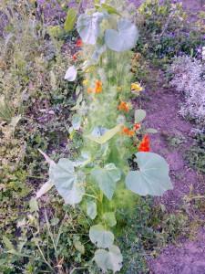Variedad de semillas