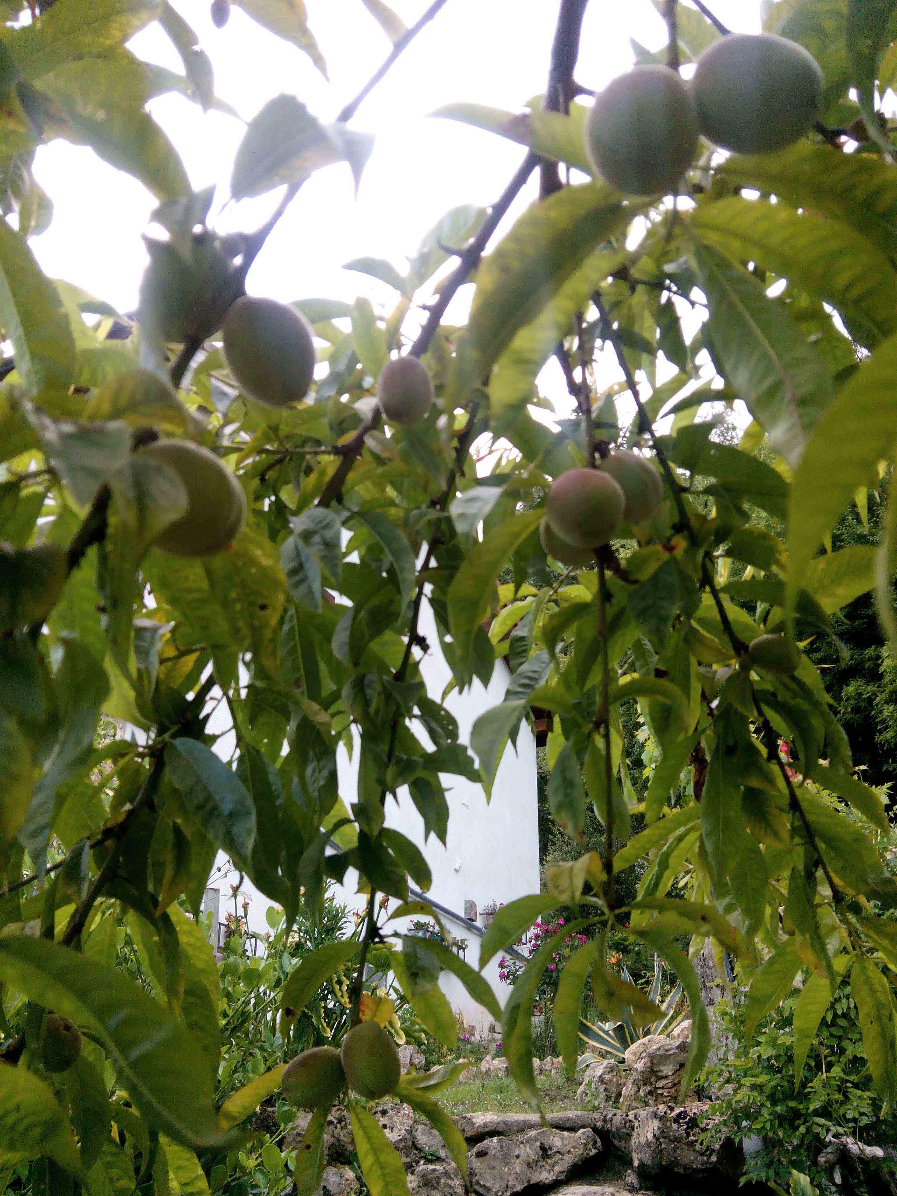 Arboles y arbustos jard n de for Arboles y arbustos de jardin