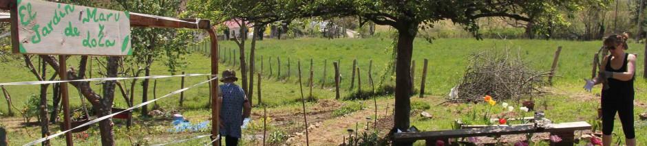 El color de las hortensias for El jardin de la lola