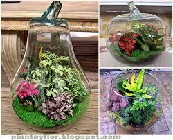 Crear Jardines En Botellas De Vidrio_03
