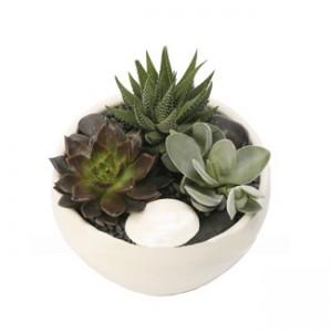 Composicion plantas crasas_02