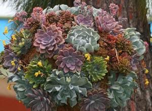 Composicion plantas crasas_04