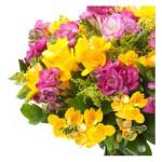 Flores perfumadas - Fresias