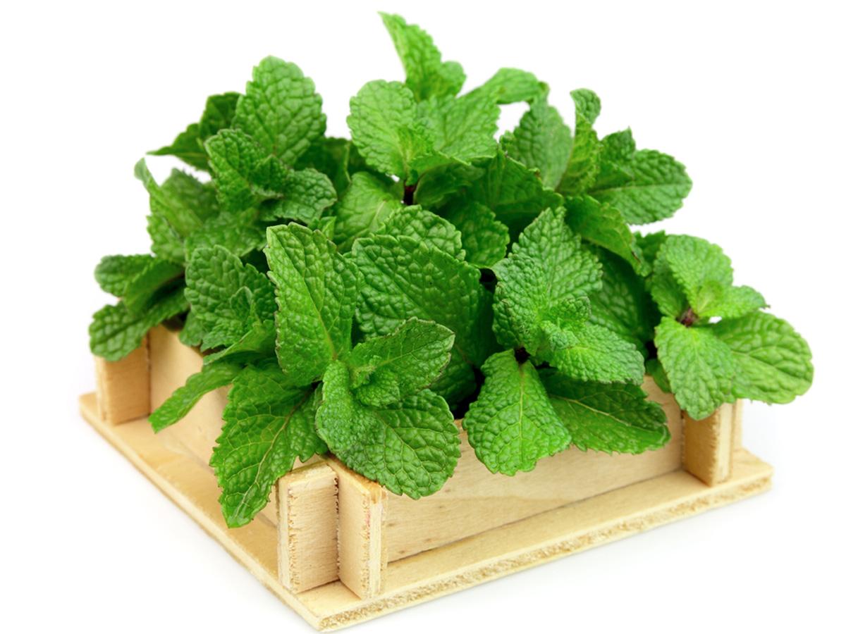 Perfuma tu casa con plantas - El jardin de lola ...