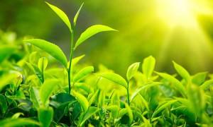 Las plantas y la luz solar_01