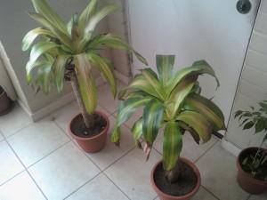Las plantas y la luz solar_04