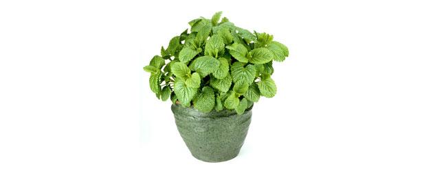 10 plantas perfectas para la oficina eljardindemaruylola for Plantas decorativas para oficina