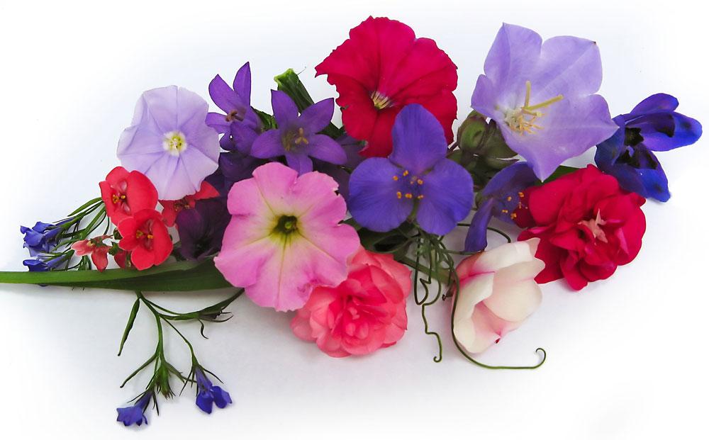 Prolongar la vida de un ramo de flores - El jardin de lola ...