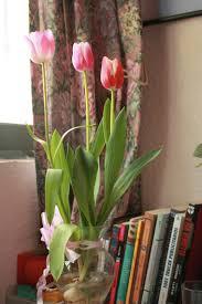 Tulipanes - Siembra_02