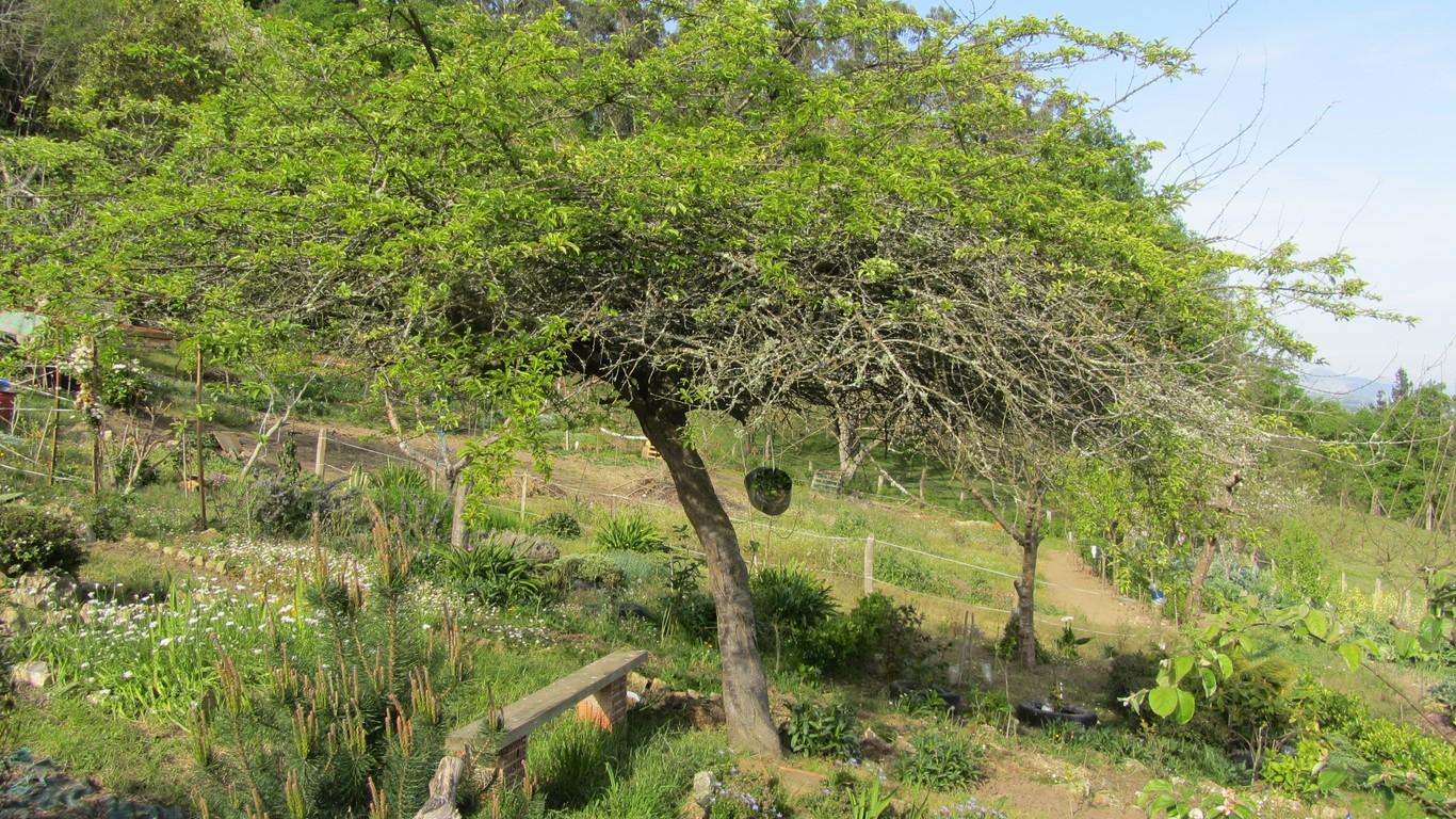 Los rboles en primavera jard n - Los jardines de lola ...