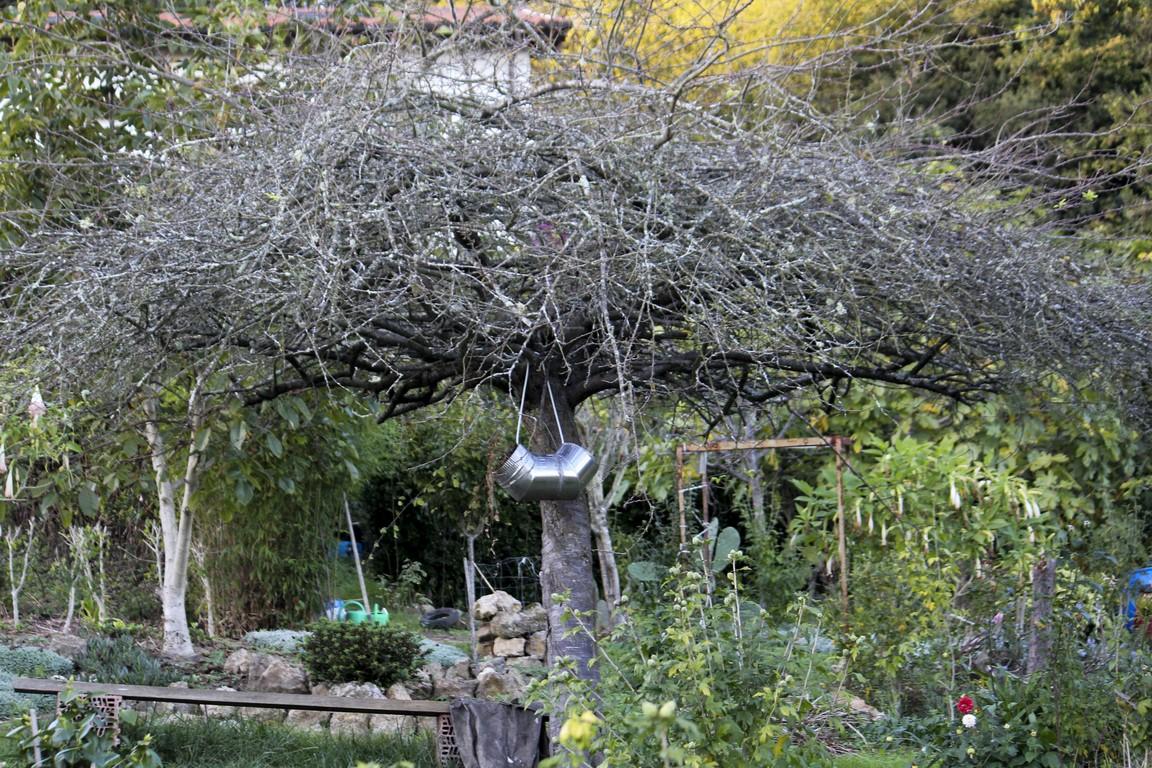 Los rboles en oto o vistos desde nuestro jard n - Los jardines de lola ...
