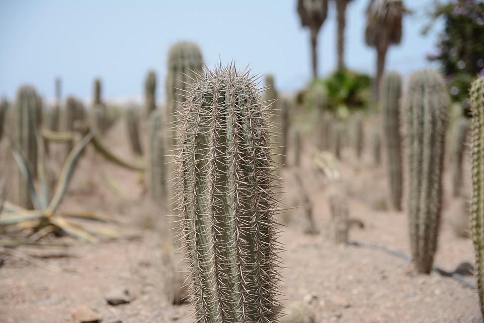 Porqu los cactus tienen espinas jard n de maru lola - El jardin de lola ...