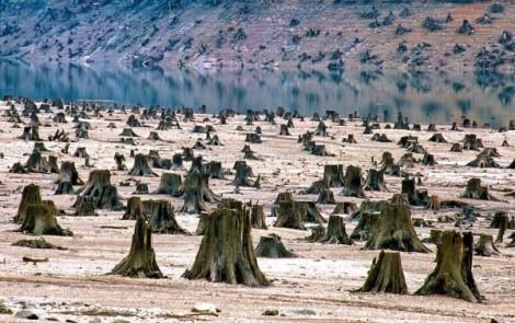 Bosque nacional de Willamette en Oregón - EEUU - deforestado