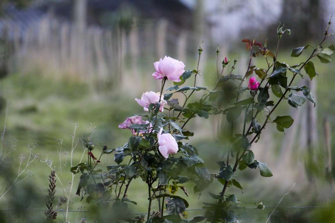 flores_04