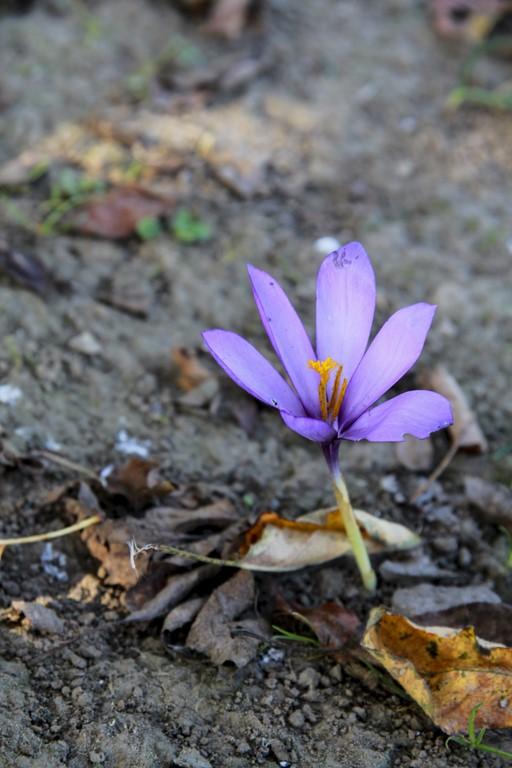 flores_10