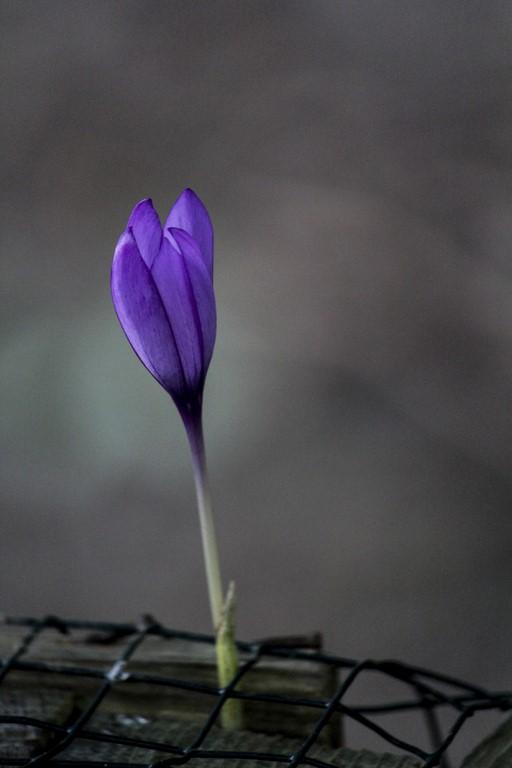 flores_11