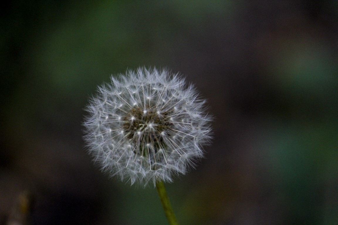 flores_12