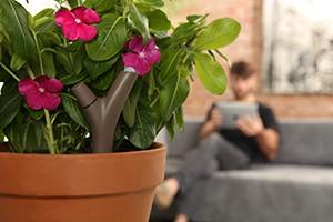 Flower Power, el sensor de plantas_03
