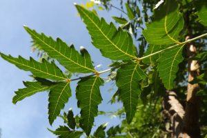 hojas-de-arboles_01