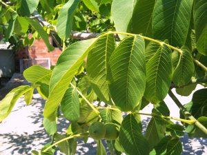 hojas-de-arboles_02