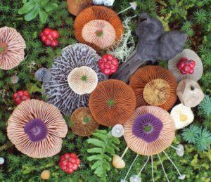 composiciones florales con hongos de canad - Composiciones Florales