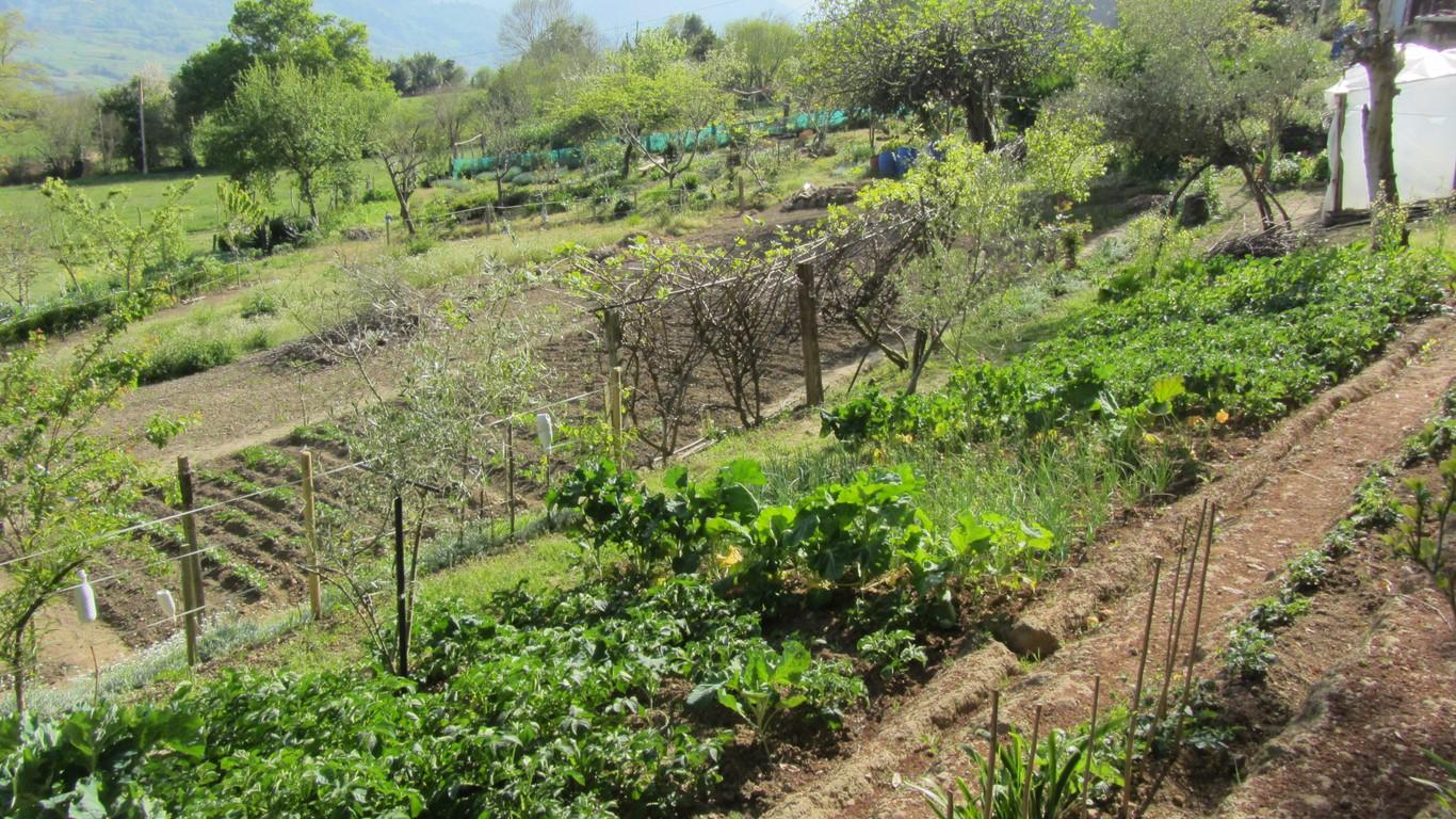 Nuestro huerto jard n de maru lola - El jardin de lola ...
