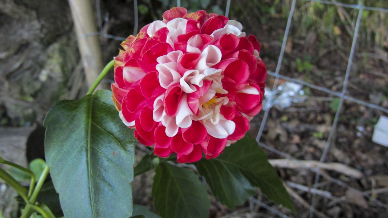 Nuestras flores jard n de maru lola - El jardin de lola ...