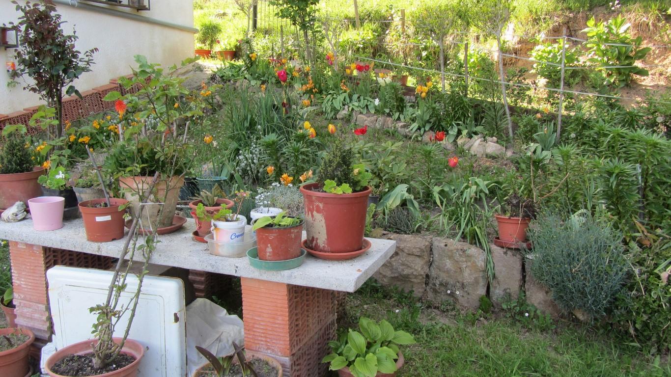 Nuestro jard n en abril jard n for Jardines de abril