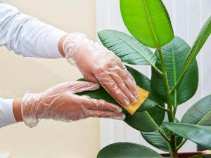 limpieza-de-las-plantas_01