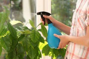 limpieza-de-las-plantas_02