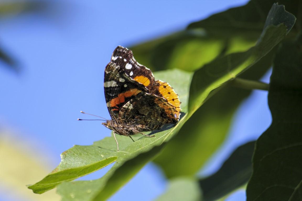 mariposa_02