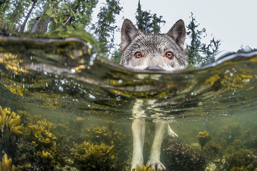 Algo huele a pescado, Costa British Columbia, Canadá/Ian Mcallister