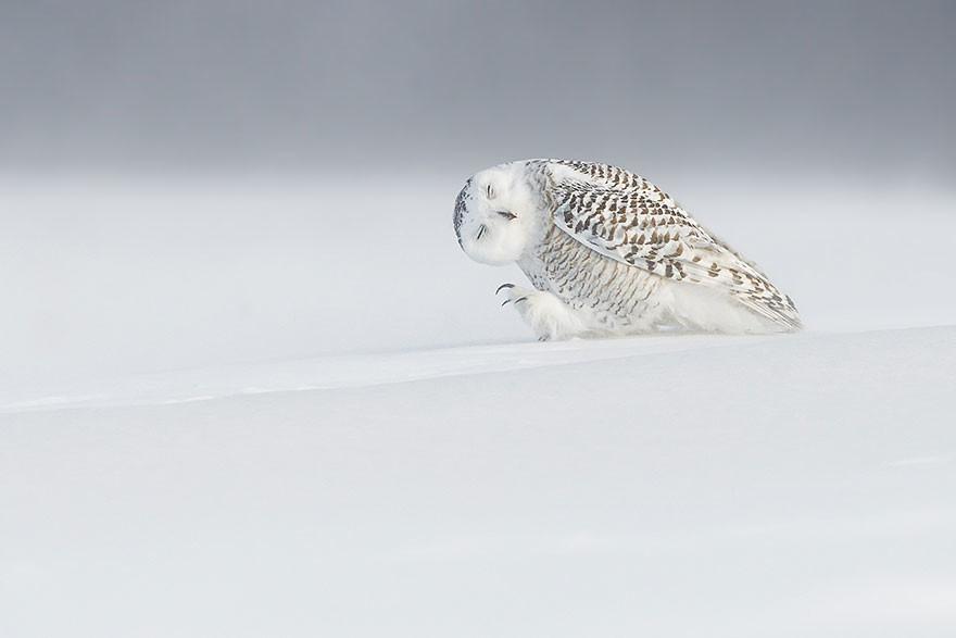 Contra el viento, Quebec, Canadá/Dominic Roy