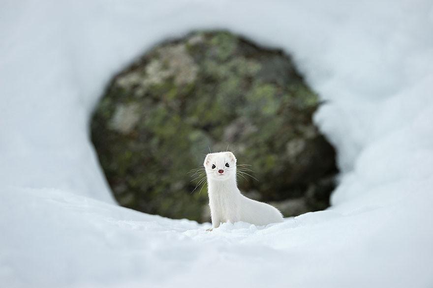 Invierno Blanco, Parque Nacional Gran Paradiso, Italia/ Stephano Unterthiner