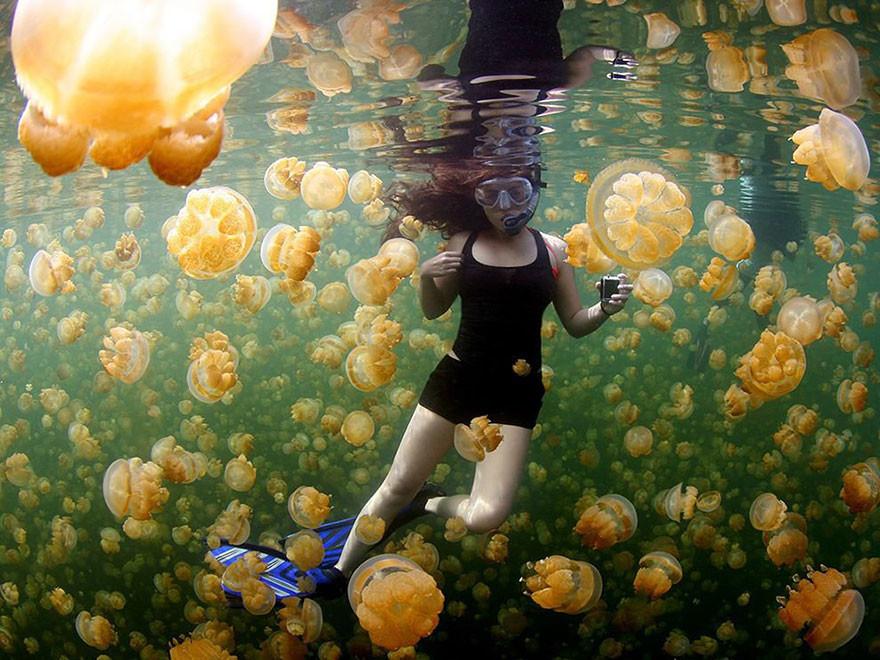Medusas Amarillas, Islas Rock, Palau/Ciemon Frank Caballes