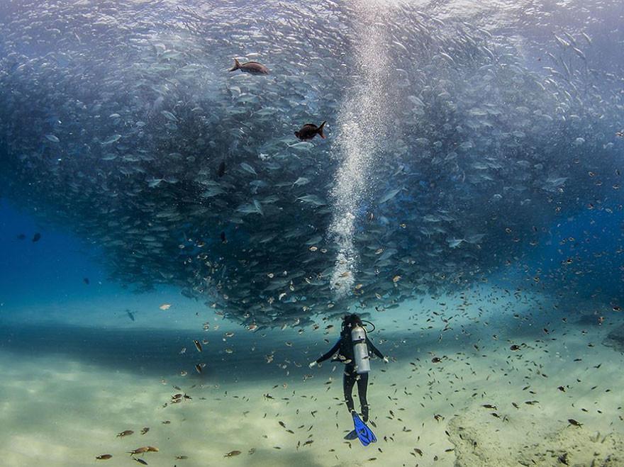 Todos los peces en el océano, Cabo Pulmo, México/Jeff Hester