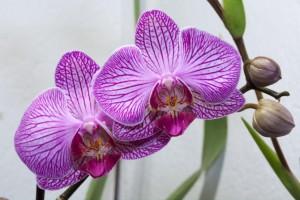 Orquídea_02