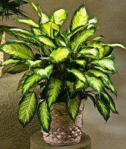plantas-de-interior_01