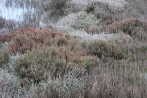 Plantas de sal_01