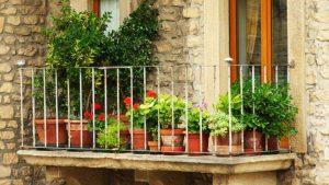 Consejos Para El Cultivo De Plantas En Terrazas Y Balcones