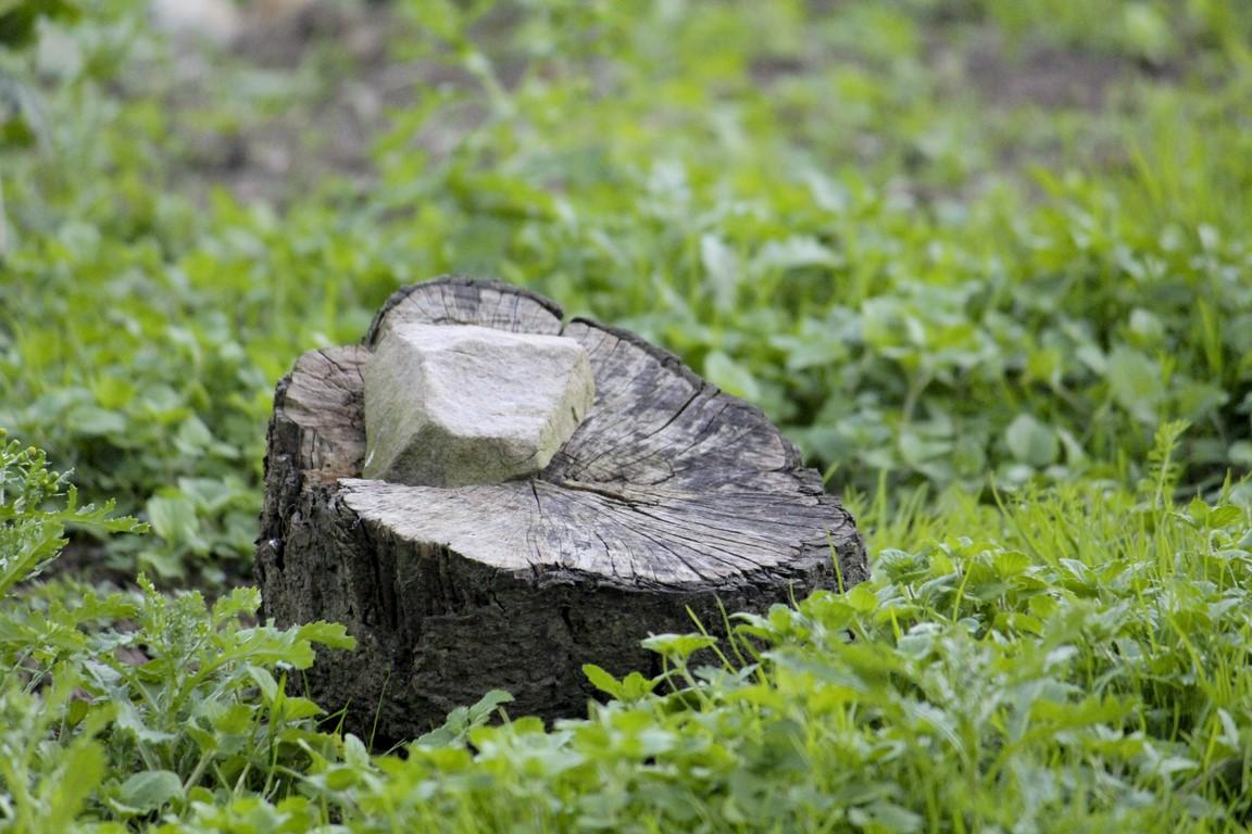 Piedra descansando en el tocón de árbol