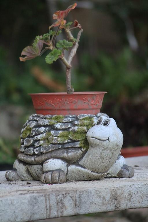 Geranio sobre la tortuga jardinera