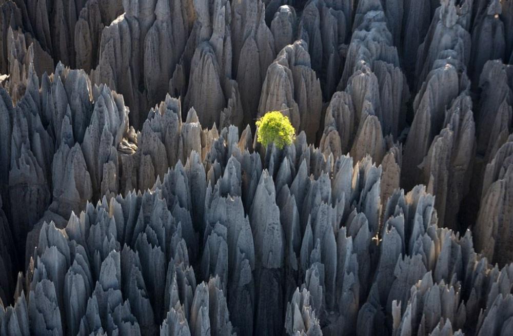 tsingy-de-bemaraha-bosque-de-rocas-madagascar